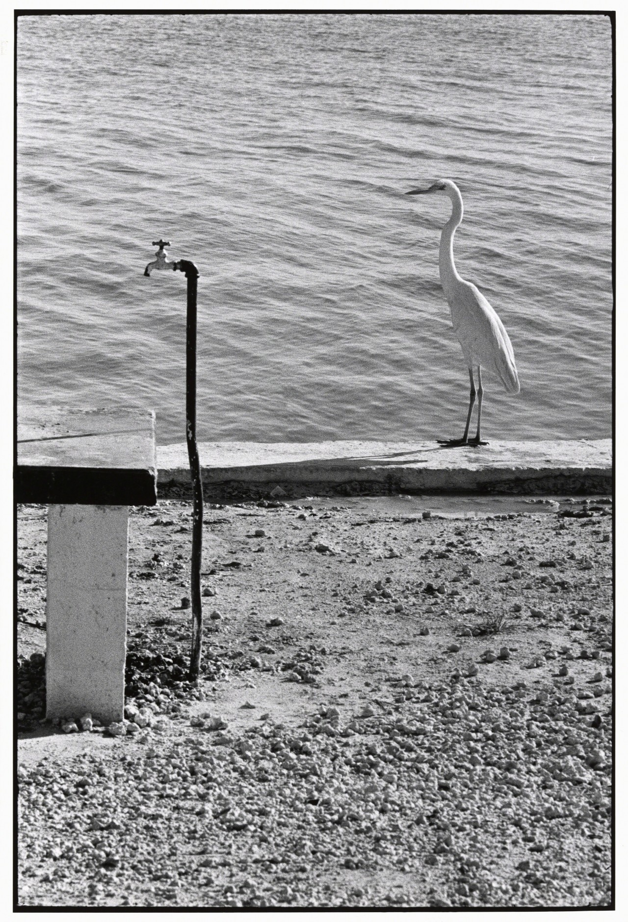 Флорида-Кис, 1968. Автор Эллиотт Эрвитт