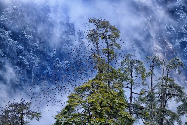 Категория «Птицы в окружающей среде», 2020. Фотограф Каллол Мукерджи