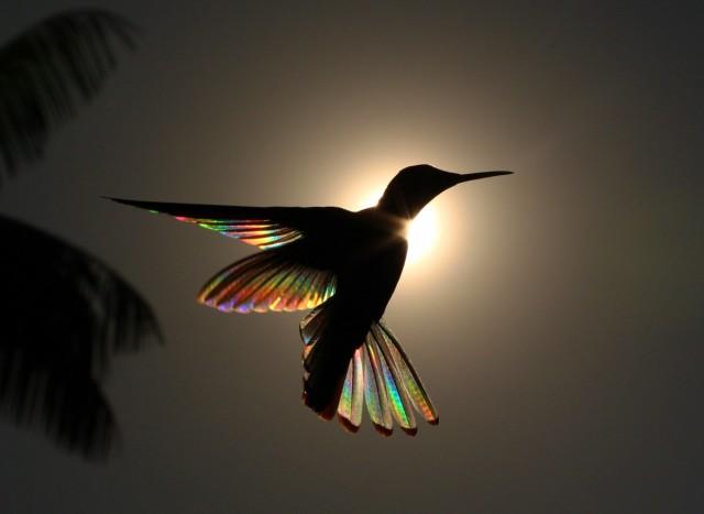 Категория «Птицы в полёте», 2020. Фотограф Кристиан Спенсер