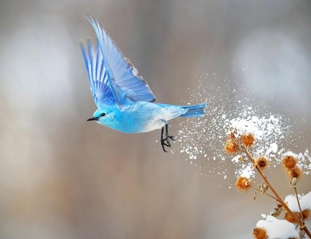 Категория «Птицы в полёте», 2020. Фотограф Тим Хопвуд