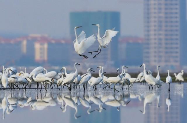 Категория «Садовые и городские птицы», 2020. Фотограф Сяо Ли