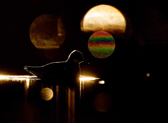 Категория «Творческие образы», 2020. Фотограф Терье Колаас