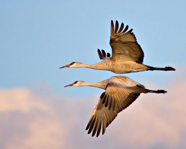 Категория «Птицы в полёте», 2020. Фотограф Том Сэвидж