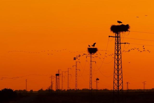 Категория «Садовые и городские птицы», 2020. Фотограф Карлос Сифуэнтес