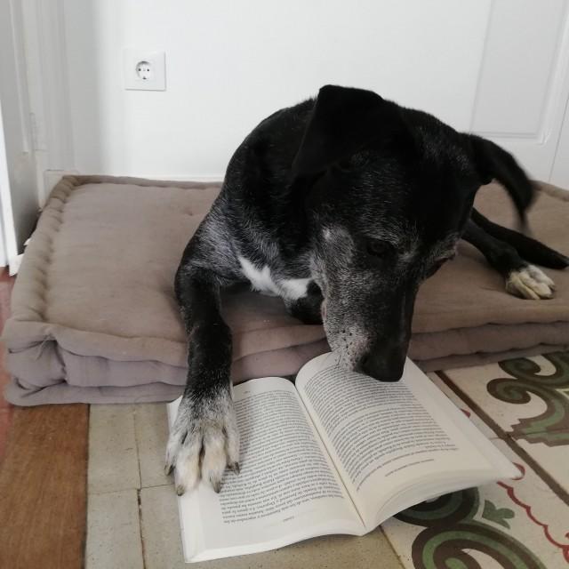 «Интеллектуальная собака». Фотограф Мария Индурайн