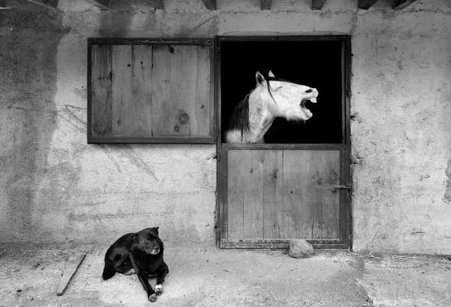 «Лошадиная улыбка». Фотограф Мехмет Аслан