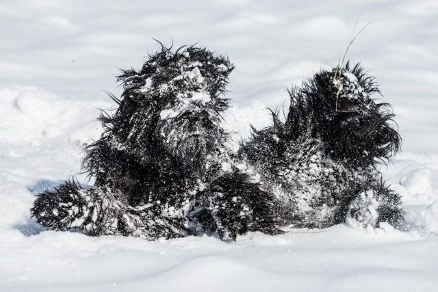 «Снежный ангел превратился в снежного монстра». Фотограф Магдалена Стракова