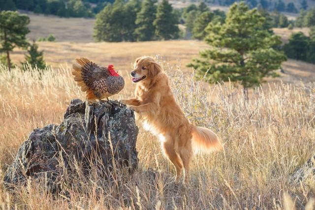 «Собака бросает охоту и заводит друга». Фотограф Карен Хоглунд