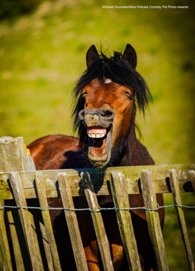 «Улыбка лошади». Фотограф Даниэль Сумилас