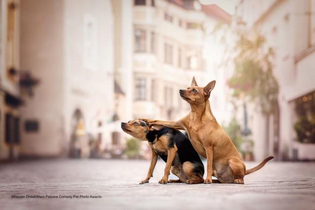 «Друзья». Фотограф Керстин Ордельт