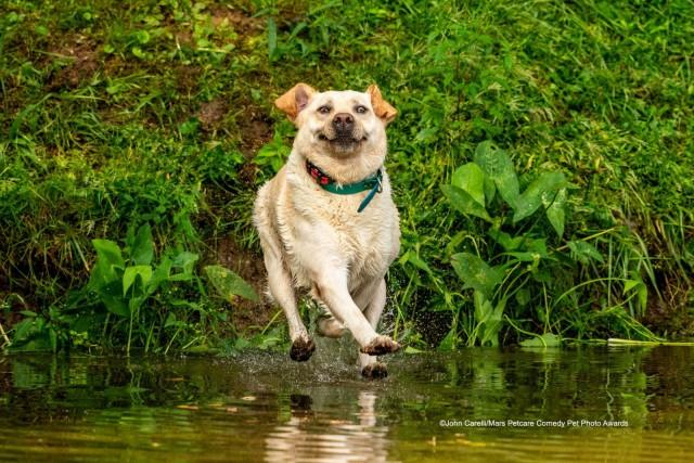 «Могу ходить по воде». Фотограф Джона Карелли