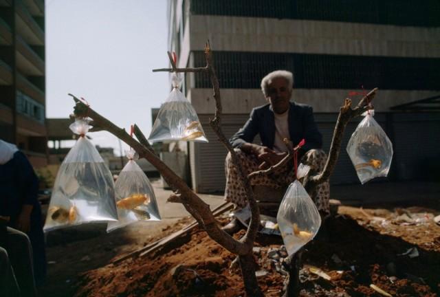 Торговля золотыми рыбками в Бейруте, Ливан, 1983. Фотограф У. Э. Гарретт