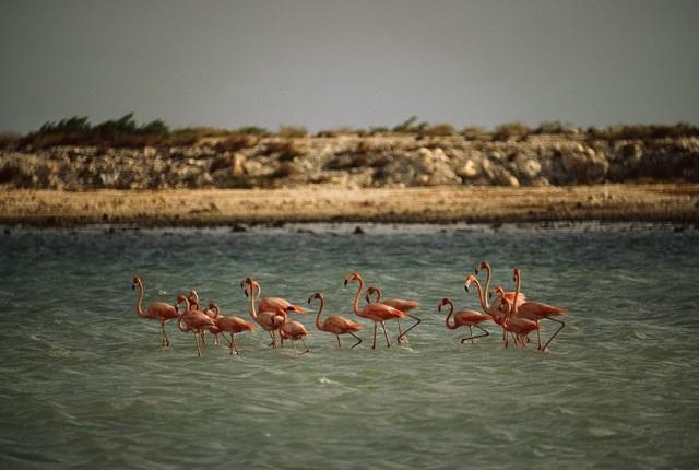 Фламинго, Нидерландские Антильские острова. Фотограф Фолькмар Курт Венцель