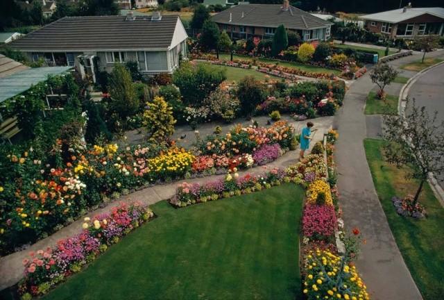Частный сад в Крайстчерче, Новая Зеландия, 1972. Фотограф Джеймс Л. Эймос