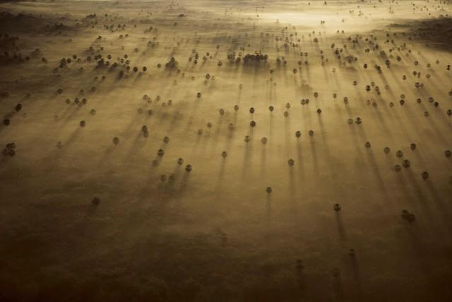 Пальмы. Штат Мату-Гросу-ду-Сул, Бразилия, 2007. Фотограф Бобби Хаас