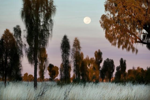 Полная луна над национальным парком Улуру-Ката Тьюта в Австралии. Парк внесён в список Всемирного наследия ЮНЕСКО. Фотограф Эми Тоенсинг