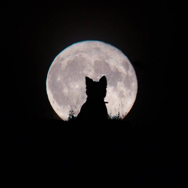 «Большая Луна и маленький оборотень». Автор Кирсти Патон