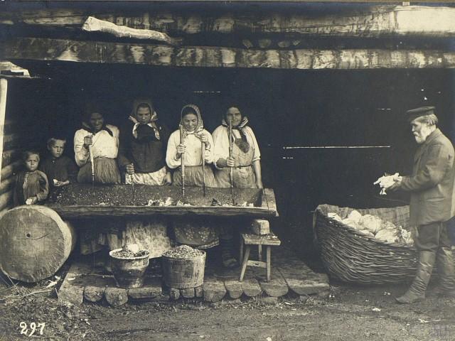 Рубка капусты. Челябинская область (Уфимская губерния), 1908. Автор М. А. Круковский