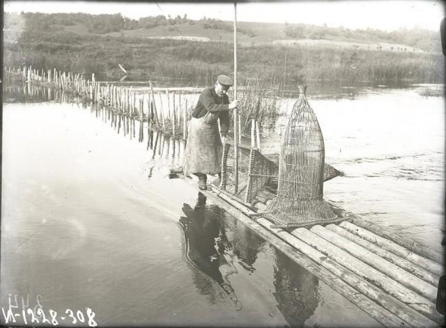 Рыбак ставит «верши» – ловушки на рыбу. Ленинградская губерния, 1925