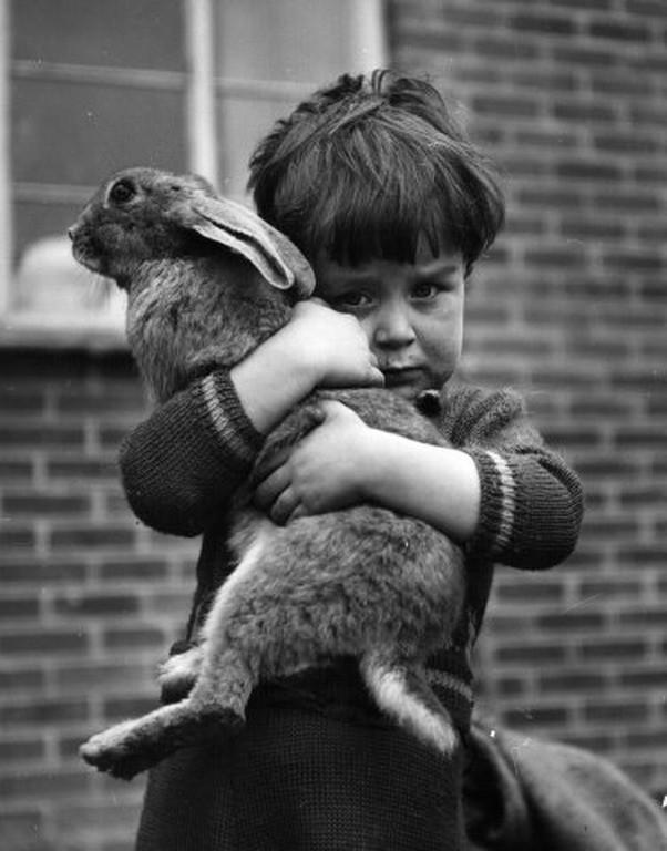 Любимый питомец. Лондон, 1952. Фотограф Чарльз Хьюитт