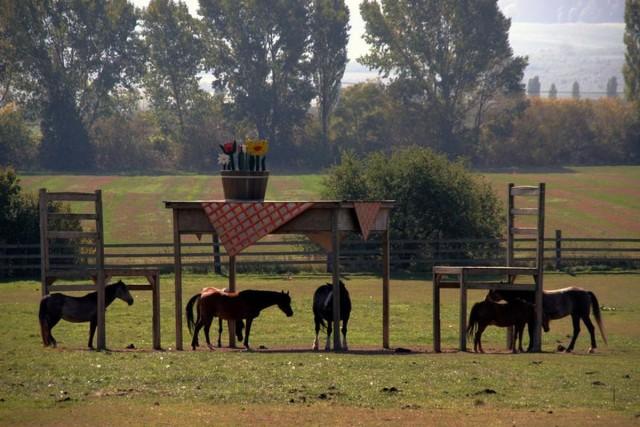 Навес для лошадей в виде домашней мебели. Автор неизвестен