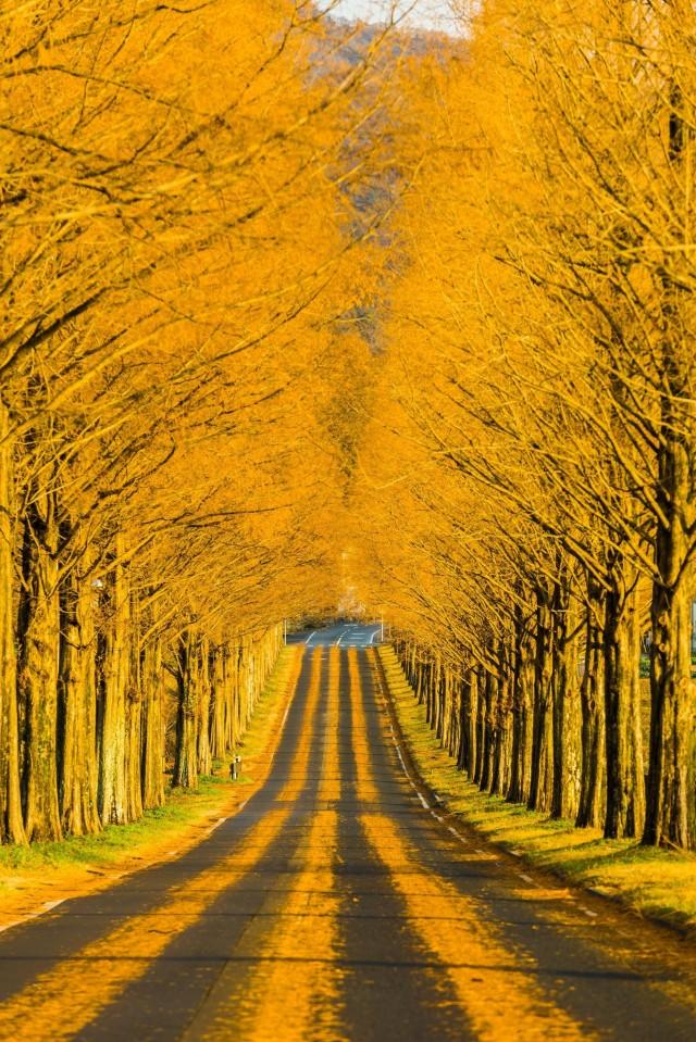 Осенний пейзаж. Фотограф Такахиро Бешо