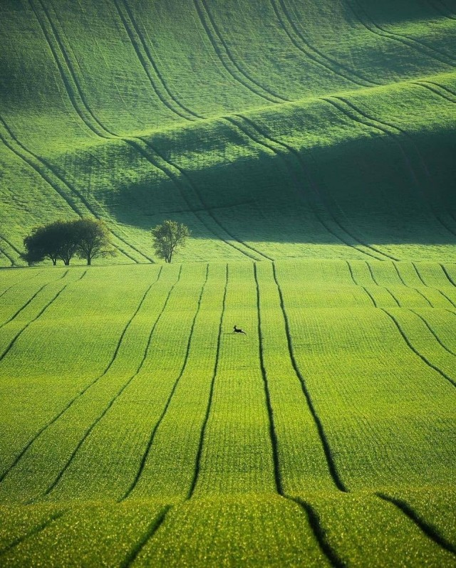 Ковры полей в чешской Моравии