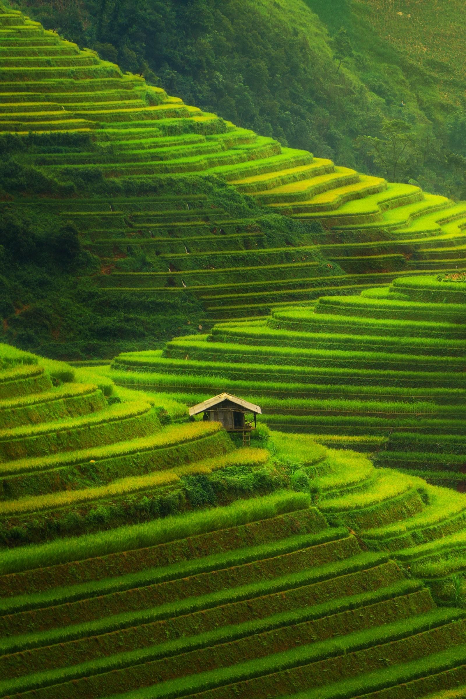 Рисовые террасные поля, Му Канг Чай, Вьетнам