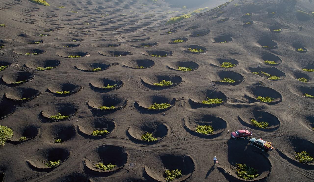 Виноградники в знаменитых вулканических «лунных» ландшафтах Лансароте. Канарские острова, Испания