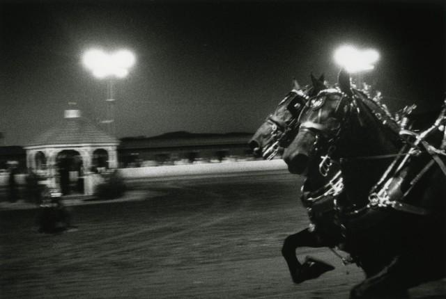 «Ночная прогулка на лошадях». Фотограф Элмо Тайд