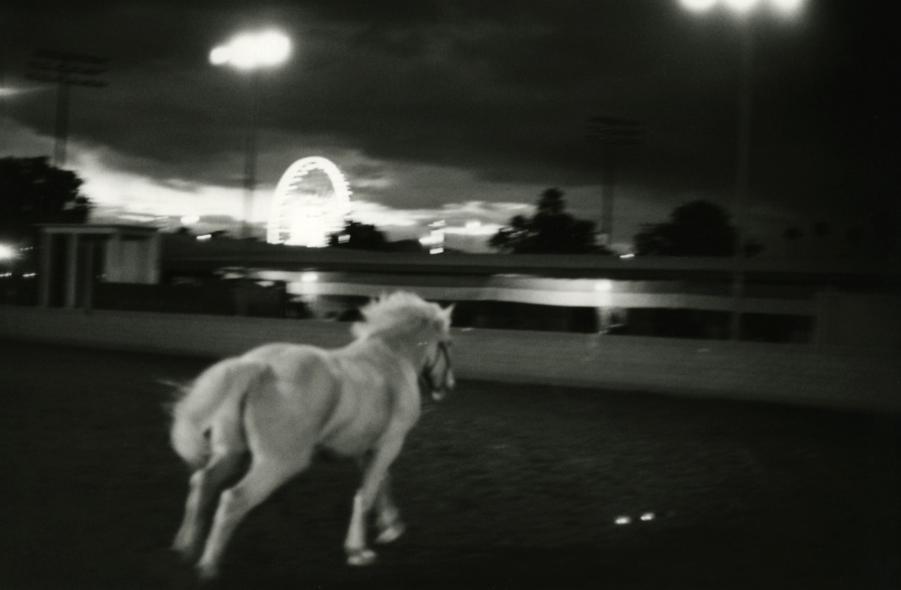 «Белый конь». Фотограф Элмо Тайд