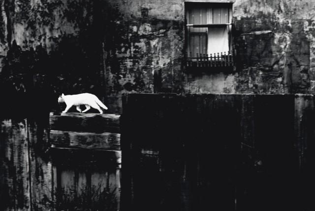 Чёрная стена с котом, Париж 1954. Фотограф Пьерджорджо Бранци