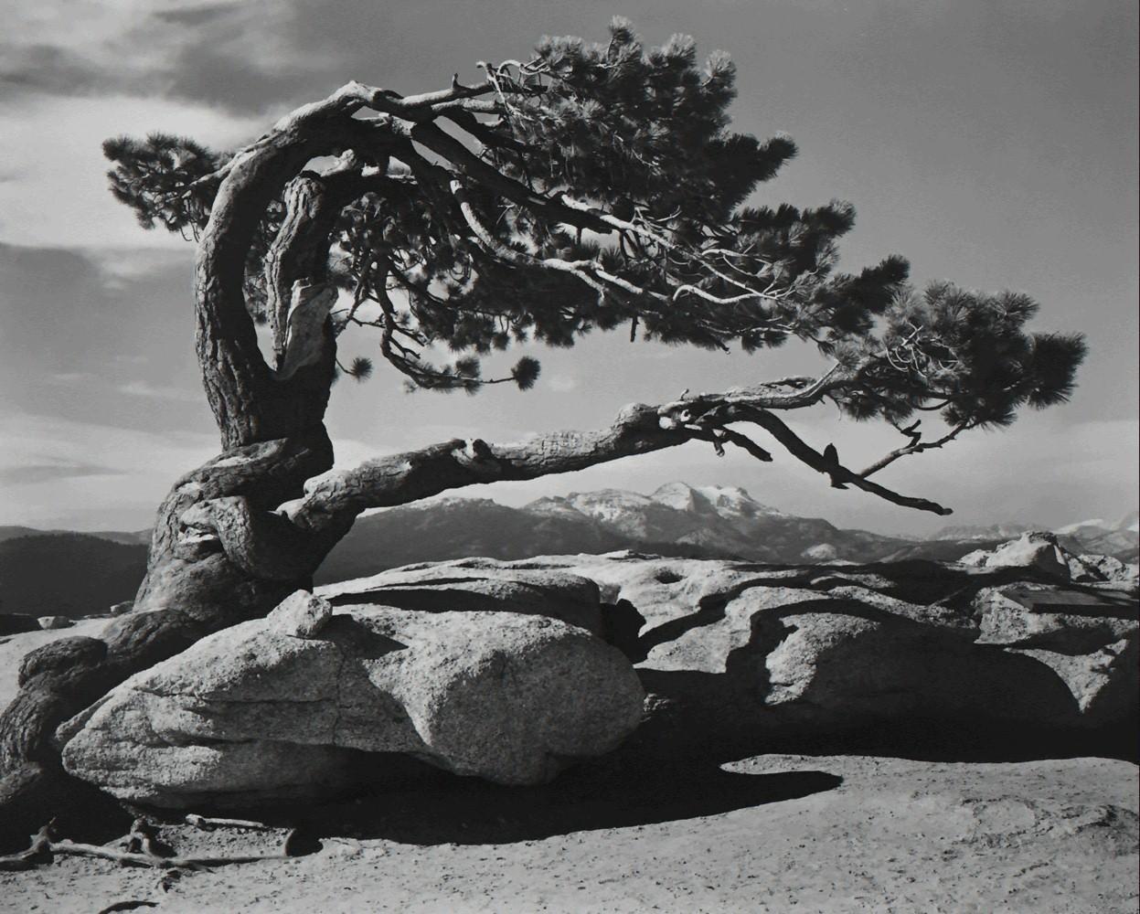 Джеффри Пайн, Дом Стража, Национальный парк Йосемити, 1940. Фотограф Энсел Адамс