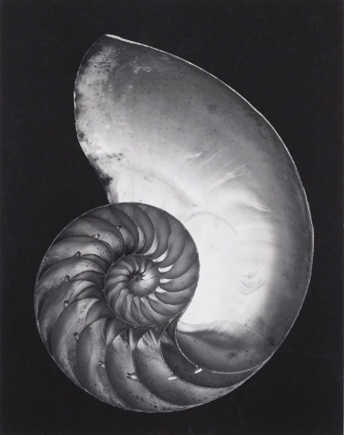 Под панцирем Наутилуса, 1927. Фотограф Эдвард Уэстон