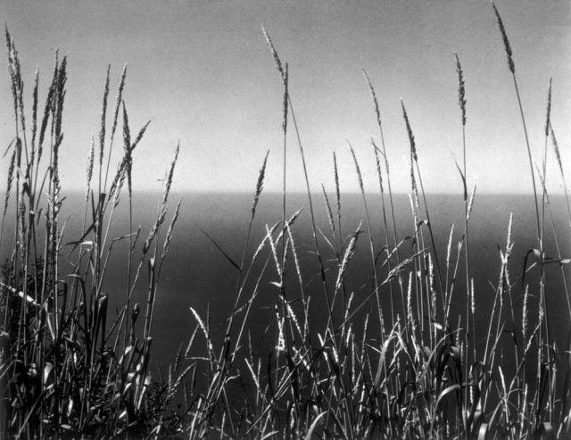 Трава напротив моря, 1937. Фотограф Эдвард Уэстон