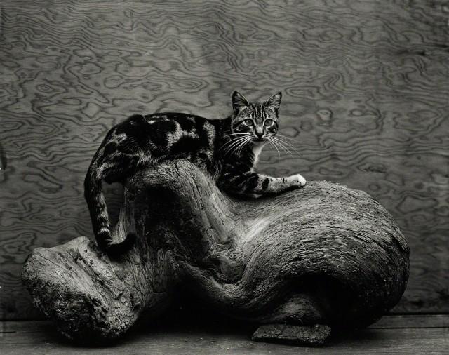 Джонни, 1944. Фотограф Эдвард Уэстон