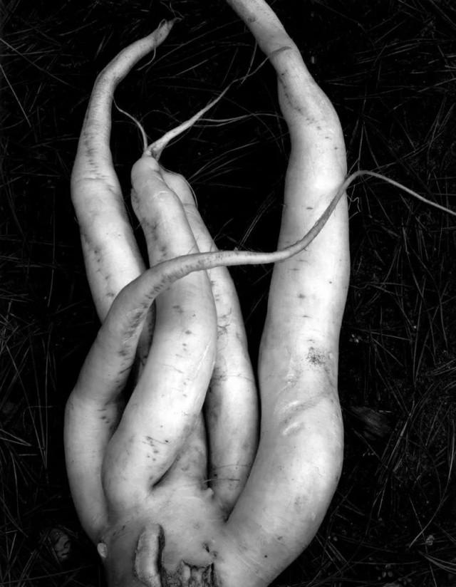 Белый редис. Фотограф Эдвард Уэстон