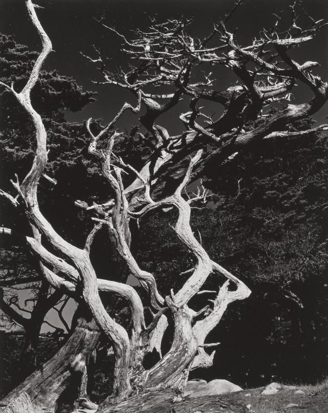 1938. Фотограф Эдвард Уэстон