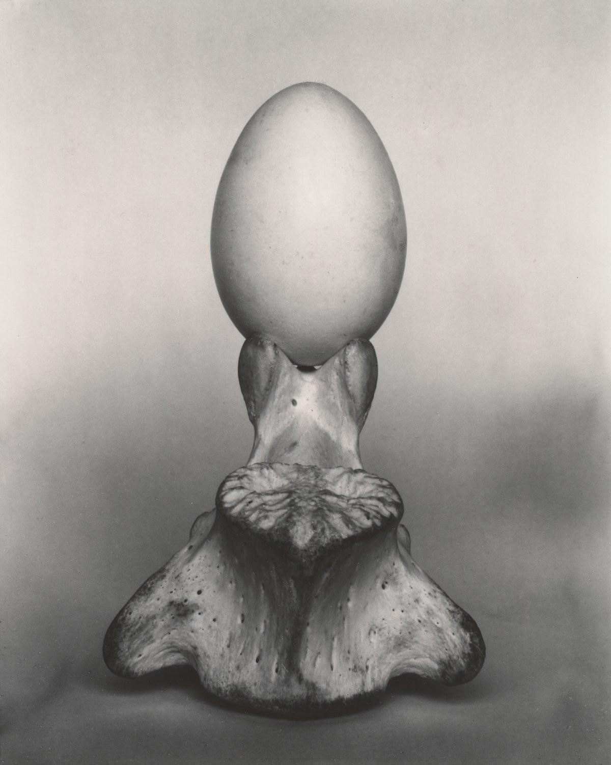 Яйцо на кости, 1930. Фотограф Эдвард Уэстон
