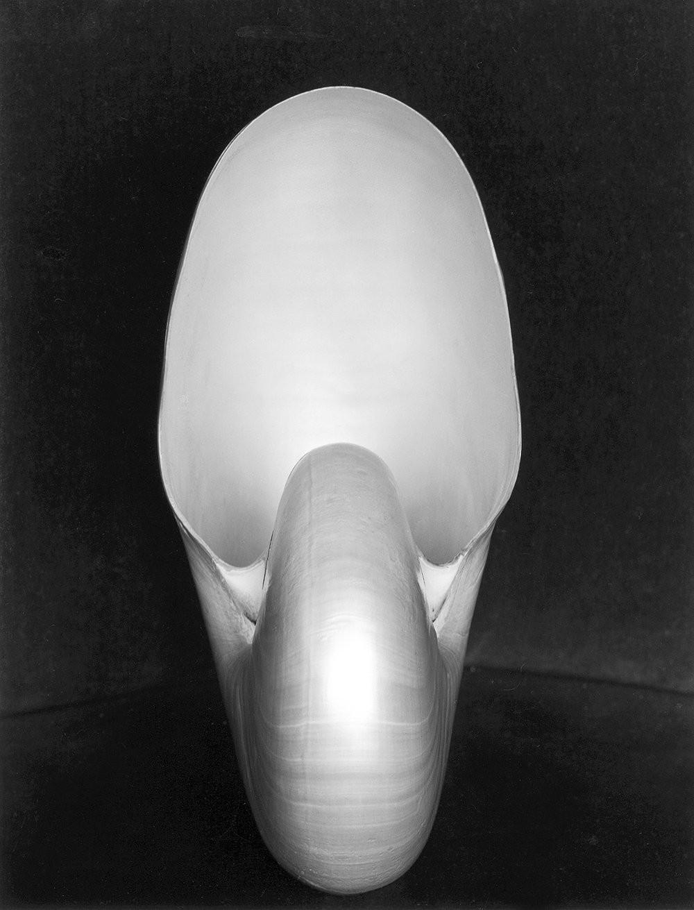 Наутилус, 1927. Фотограф Эдвард Уэстон