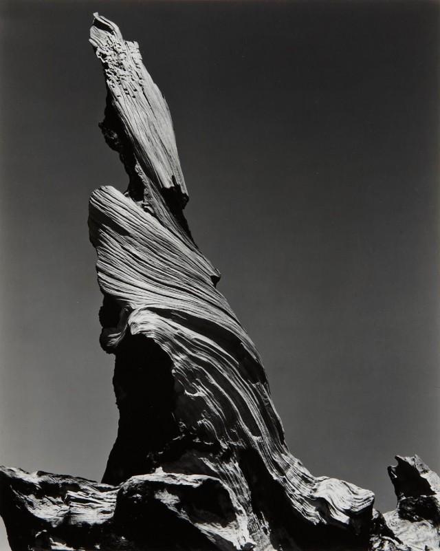 Пень Дрифтвуда, Пляж Кресент. Фотограф Эдвард Уэстон
