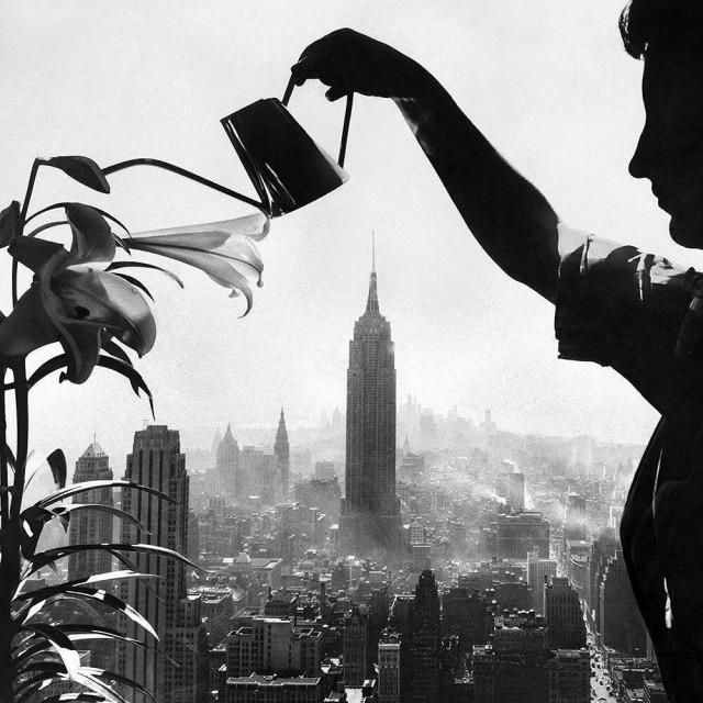 Лилии и Нью-Йорк, 1955. Фотограф Эрнест Систо
