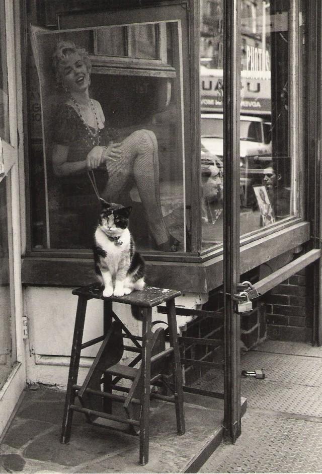 «Кот и Мэрилин», Томпсон-стрит, Нью-Йорк, 1988. Фотограф Виктор Макароль (Victor Macarol)
