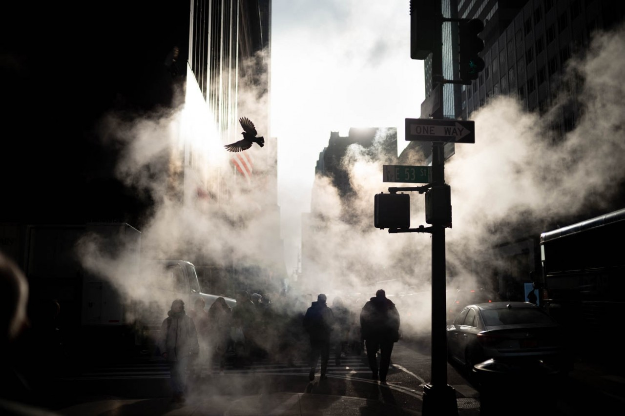 Птица на Пятой авеню, Нью-Йорк. Фотограф Фил Пенман