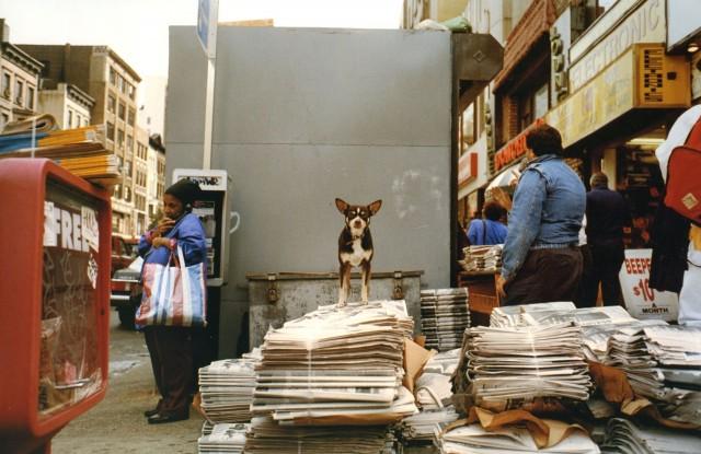 «Пресса». Нью-Йорк, 1993. Фотограф Джефф Мермельштейн