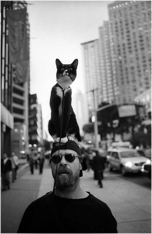 Прогулка с котом, Нью-Йорк. Фотограф Мэтт Вебер
