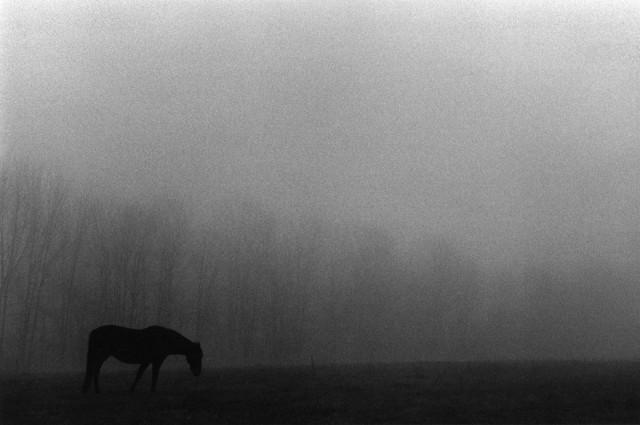 Лошадь на туманном пастбище, 1974. Фотограф Гарольд Файнштейн