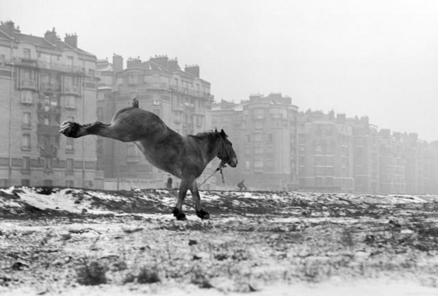 Лошадь, Порт-де-Ванв, Париж, 1952. Фотограф Сабина Вайс