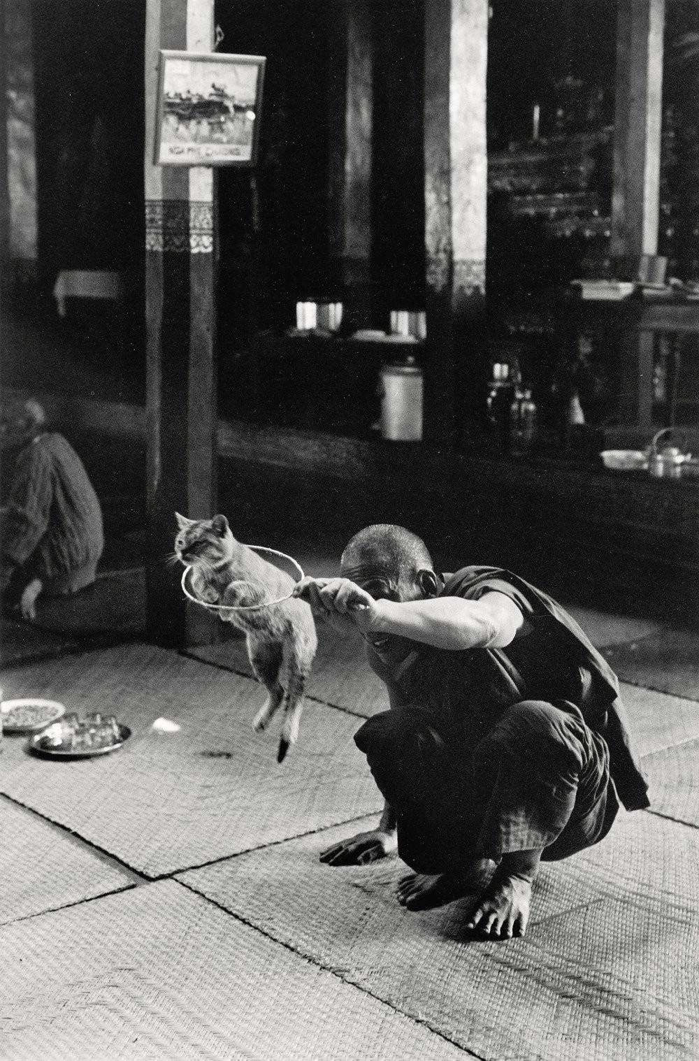 Монастырь прыгающих кошек, 1950. Фотограф Сабина Вайс