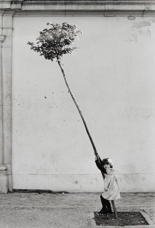 Маленькая девочка и деревце, Франция, 1981. Фотограф Сабина Вайс
